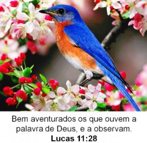 mensagem de sabedoria we1 (6)